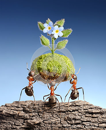 Ants bring living nature on dead rocks, concept