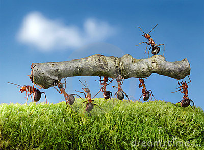 Ants carry log with chief on it, team work