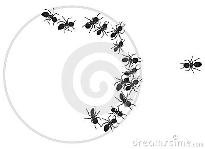 Ants in a circle