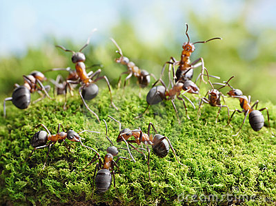 Ants create network in anthill