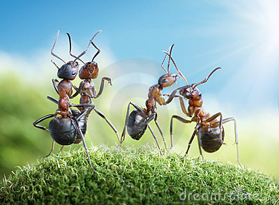 Ants dancing under the sun