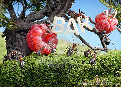 Ants enjoy juicy fruits, fresh juice bar
