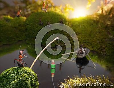 Ants fishing on sunrise, ant tales
