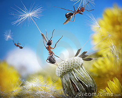 Ants flying with crafty umbrellas, ant tales