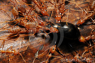 Ants with food