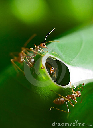 Free Ants Guarding Nest Royalty Free Stock Photos - 5283568