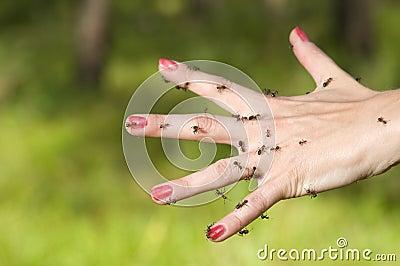 Ants on hand