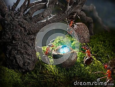 Ants hide treasure diamond , ant tales