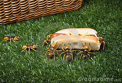 Ants At A Picnic Stealing Food