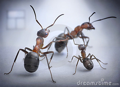 Ants play human situation of family scandal