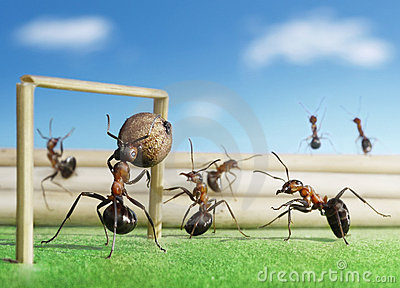 Ants play soccer, micro football