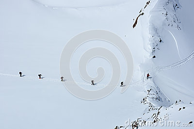 Ants in the snow