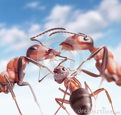 Free Ants Under Peaceful Sky Stock Photography - 31802972