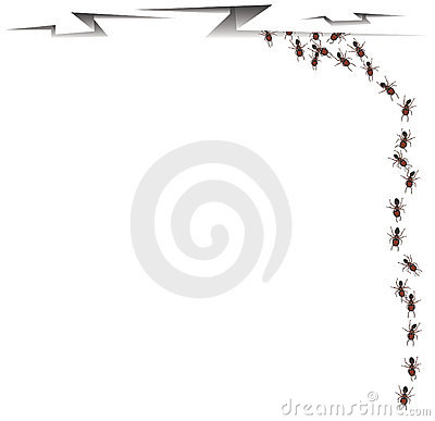 Ants walking into a crack