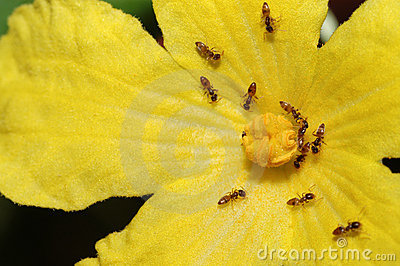 Ants working on the flower