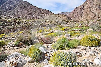 Anza-Borrego Desert State Park , California