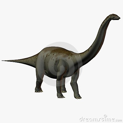 Free Apatosaurus Royalty Free Stock Images - 783439
