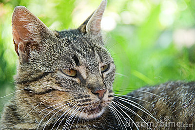 Apenas um gato cinzento