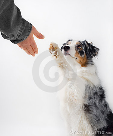 Aperto de mão do cão e do ser humano.
