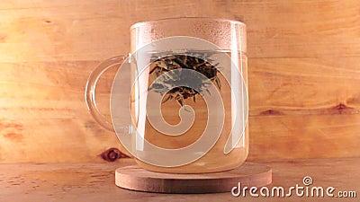 Apertura del fiore del tè stock footage