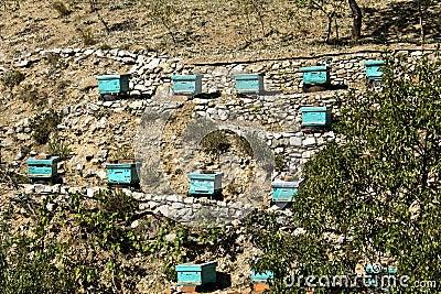 Apiary beehives
