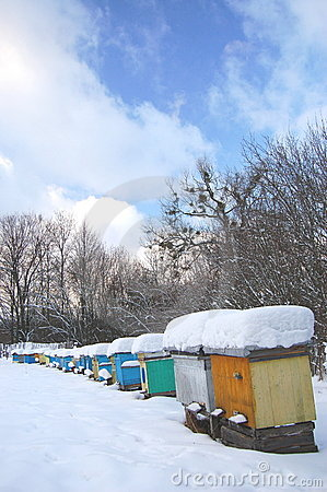 Apiary in wintertime