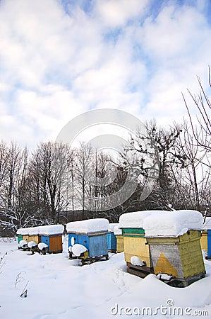 Apiary in wintertime