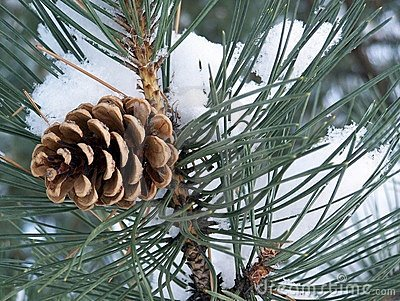 Appel-pine
