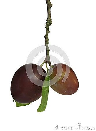 Appetizing plums
