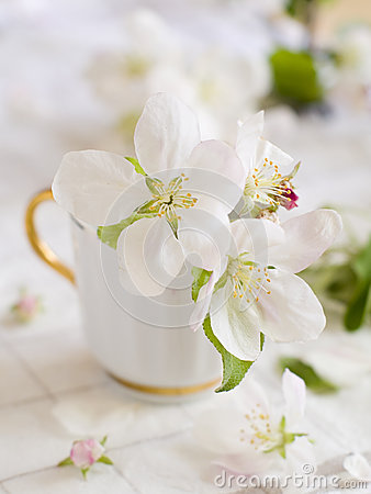 Apple开花