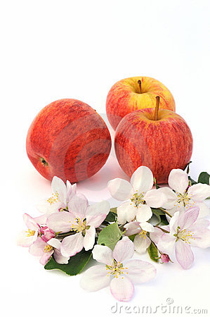 Apple and aplle-tree blossoms
