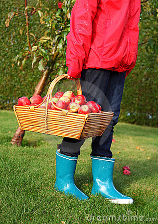 Free Apple Autumn Basket Royalty Free Stock Photos - 11321428