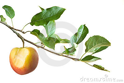 Apple with bite on a branch