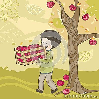 Apple cosecha
