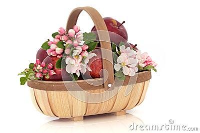 Apple Flower Blossom