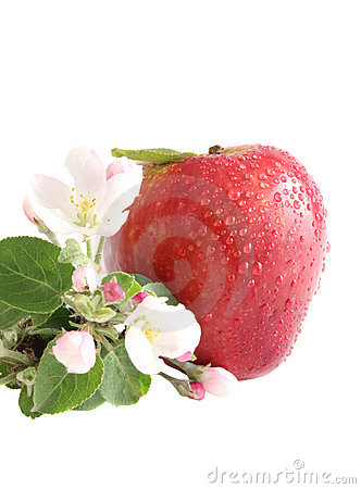 Apple and flowers