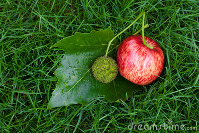 Apple on the grass with leaves