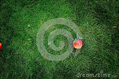 Apple on grass