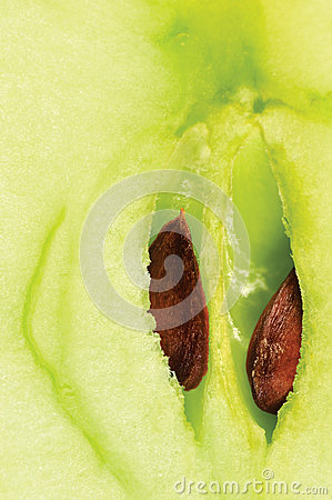 Apple half cut green core seeds macro closeup