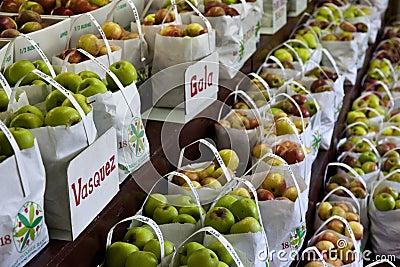 Apple Harvest Editorial Stock Image
