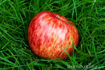 apple lying on green grass