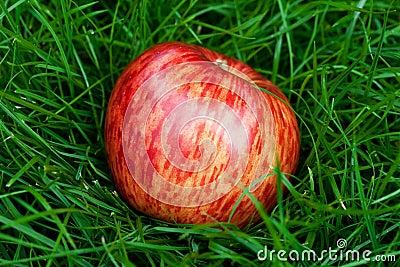 apple lying on green grass
