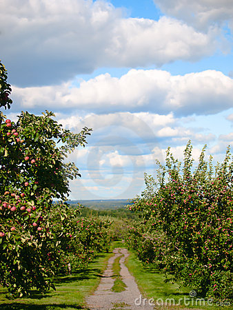 Free Apple Orchard Pathway Royalty Free Stock Images - 16312419