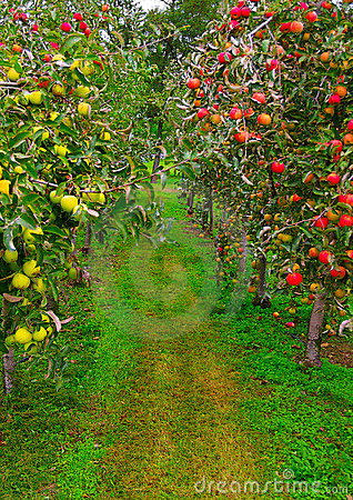Free Apple Path Royalty Free Stock Images - 2501909