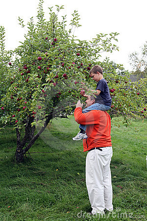 Apple picking on Dad s shoulders