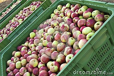Apple shipping