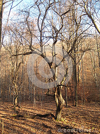 Free Apple Tree Stock Image - 44614271