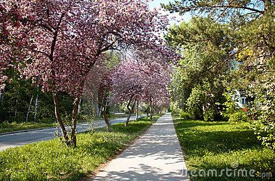 Apple-tree alley