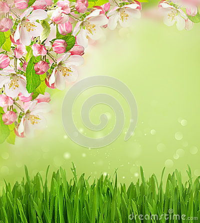 Free Apple Tree Blossoming, Grass Blurred Background Royalty Free Stock Photo - 38812255