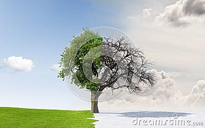 Apple tree in changing seasons